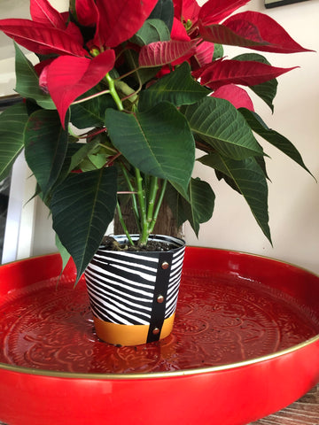 Zebra Plant Pot Cover