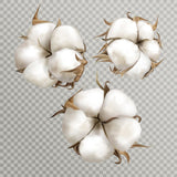 Realistic cotton branches with flowers, beautiful plant  #829