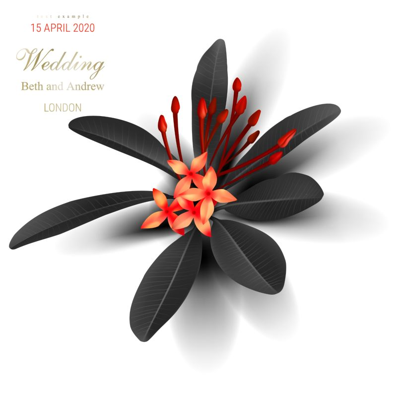 Tropical black leaves, exotic red flower on  #164