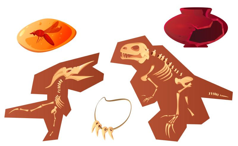 Archaeological and paleontological finds cartoon vector illustration.  #416