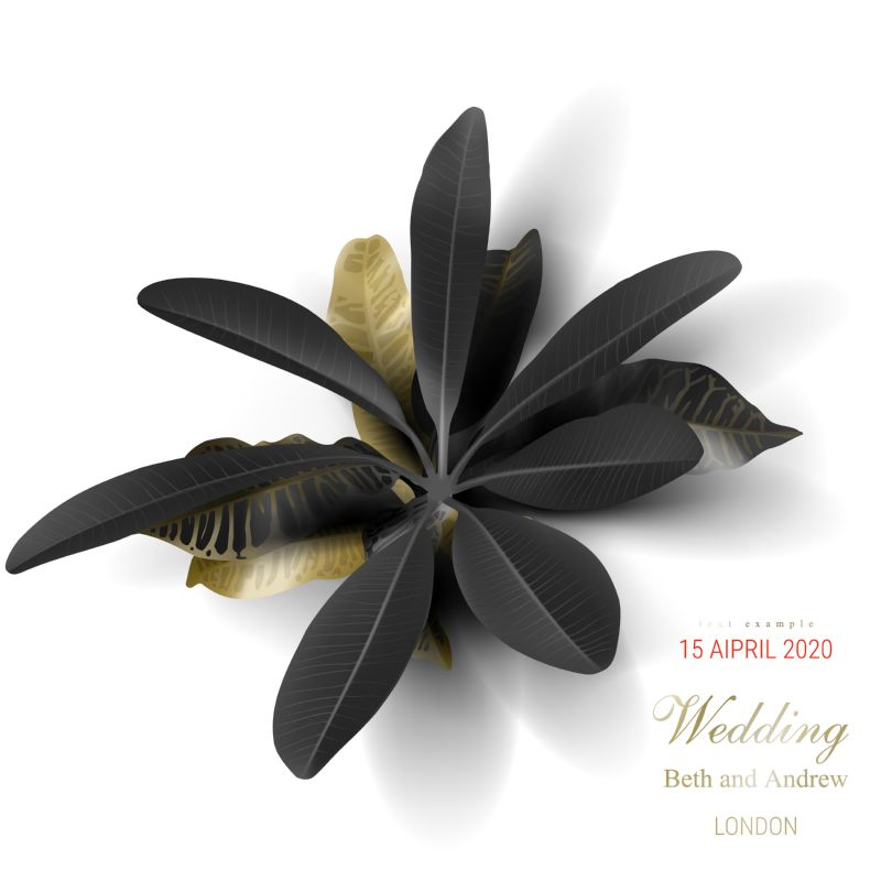 Tropical black and gold leaves on white  #369