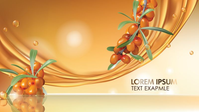 Sea buckthorn vector realistic ads poster. Branch  #374