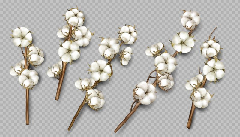 Realistic cotton branches with flowers, beautiful stems  #834