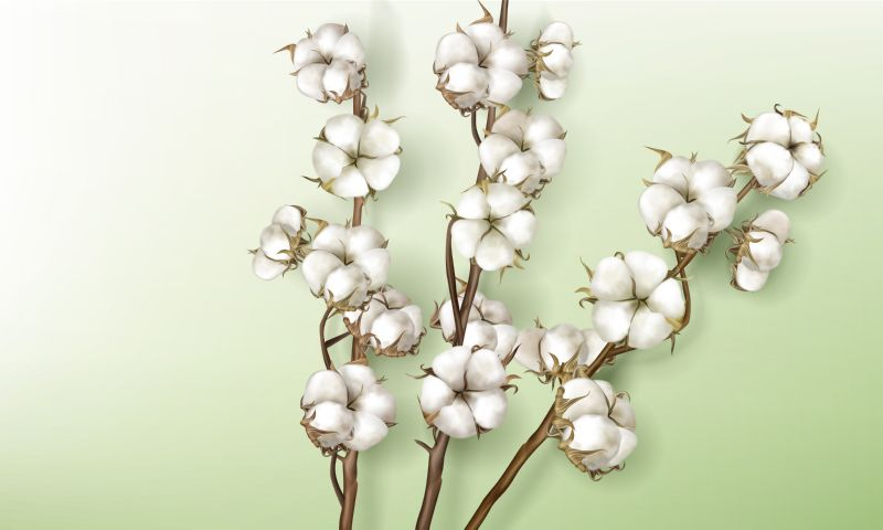 Realistic cotton branches with flowers, beautiful stems  #833