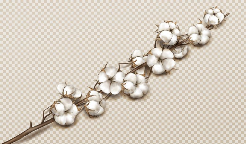 Realistic cotton branch with flowers, beautiful stem  #830