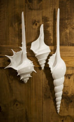 DuFour Shell Wall Decor- Set of 3
