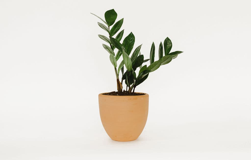 Small Potted Houseplant