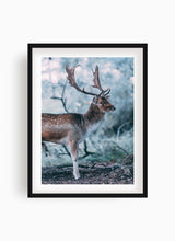 Load image into Gallery viewer, Fallow deer