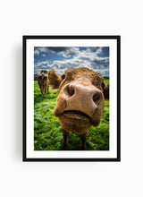 Load image into Gallery viewer, Cow
