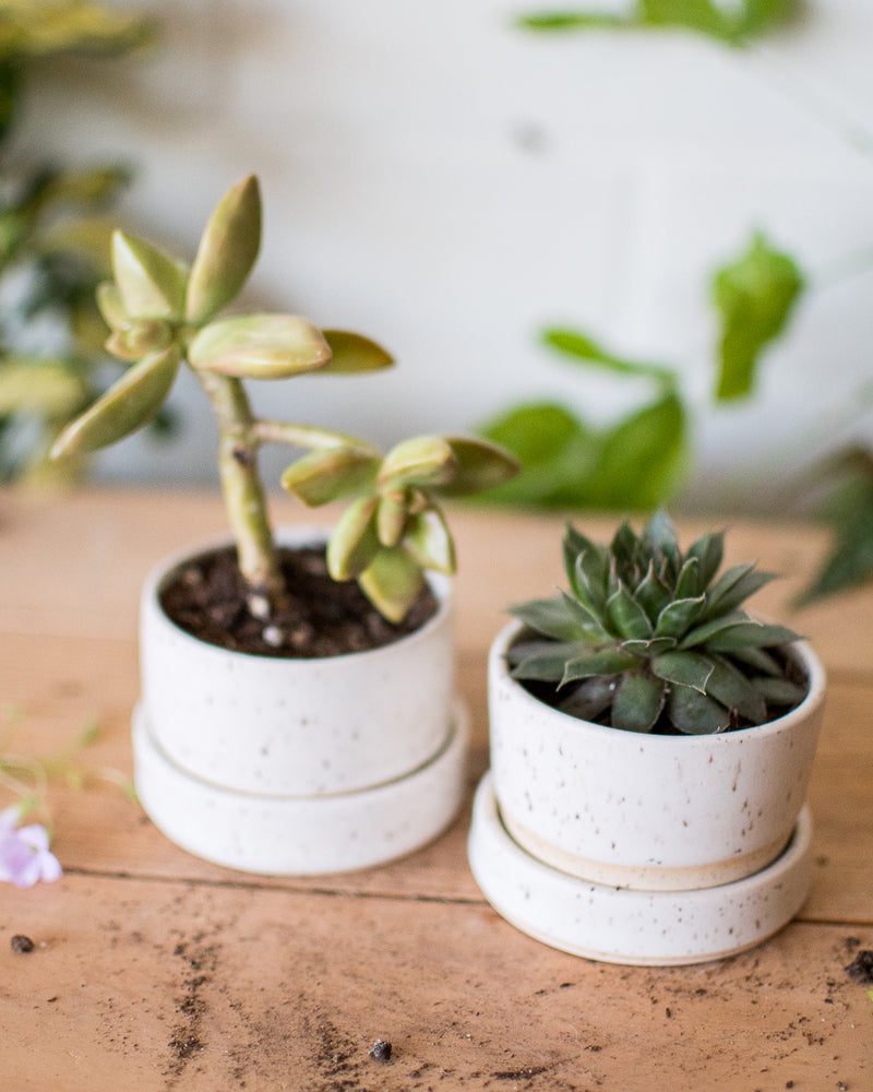 Perfectly Imperfect - Succulent Cute Combo