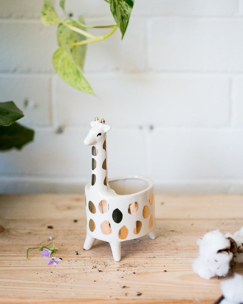 April the Giraffe - Vessels - STUDIO FOLIAGE