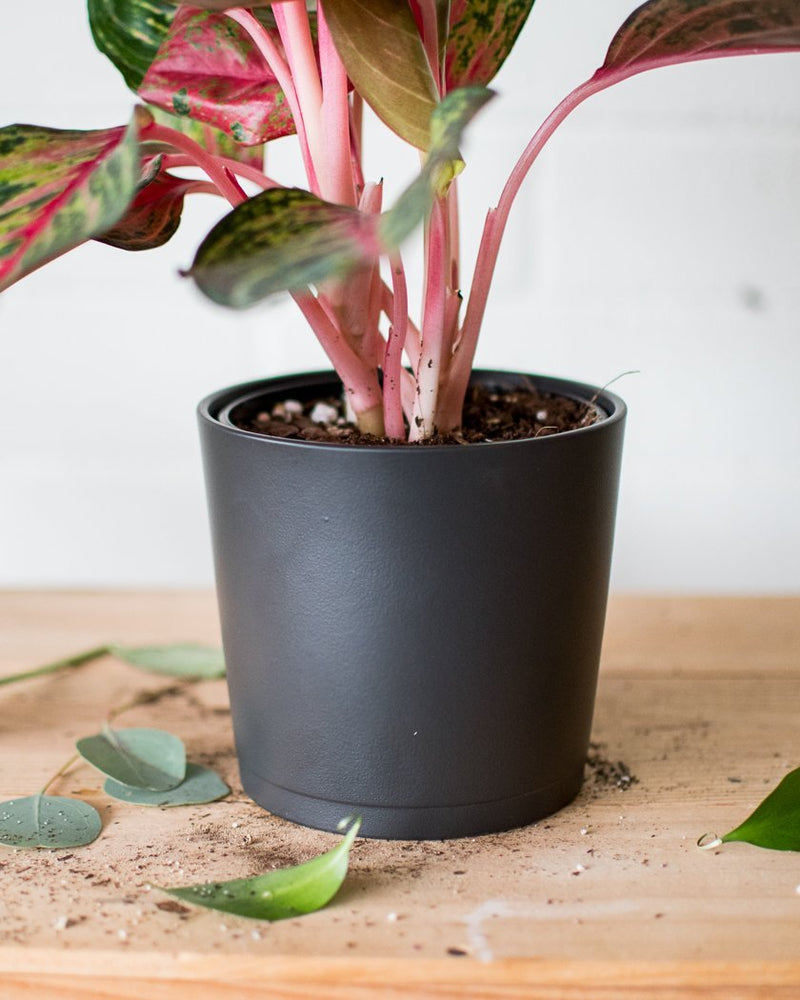 Load image into Gallery viewer, Charcoal - Cachepot - Vessels - STUDIO FOLIAGE