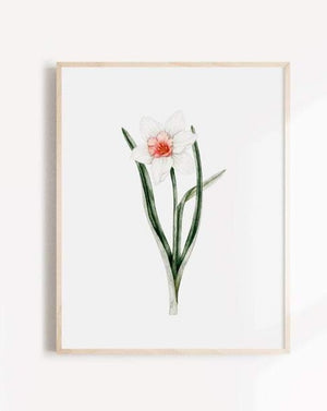 Load image into Gallery viewer, Daffodil - Poster - Marie-Lise - Art - STUDIO FOLIAGE