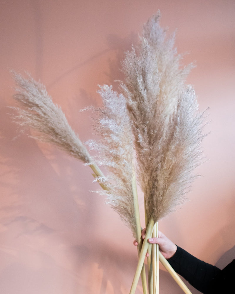 Dried Pampas Grass Bundles - Bouquets - STUDIO FOLIAGE
