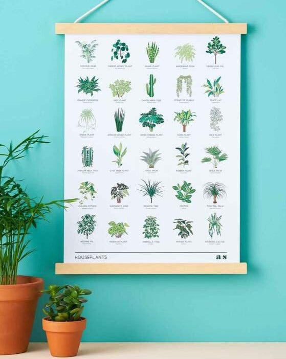 Houseplants - Art Print - Another Studio - Art - STUDIO FOLIAGE