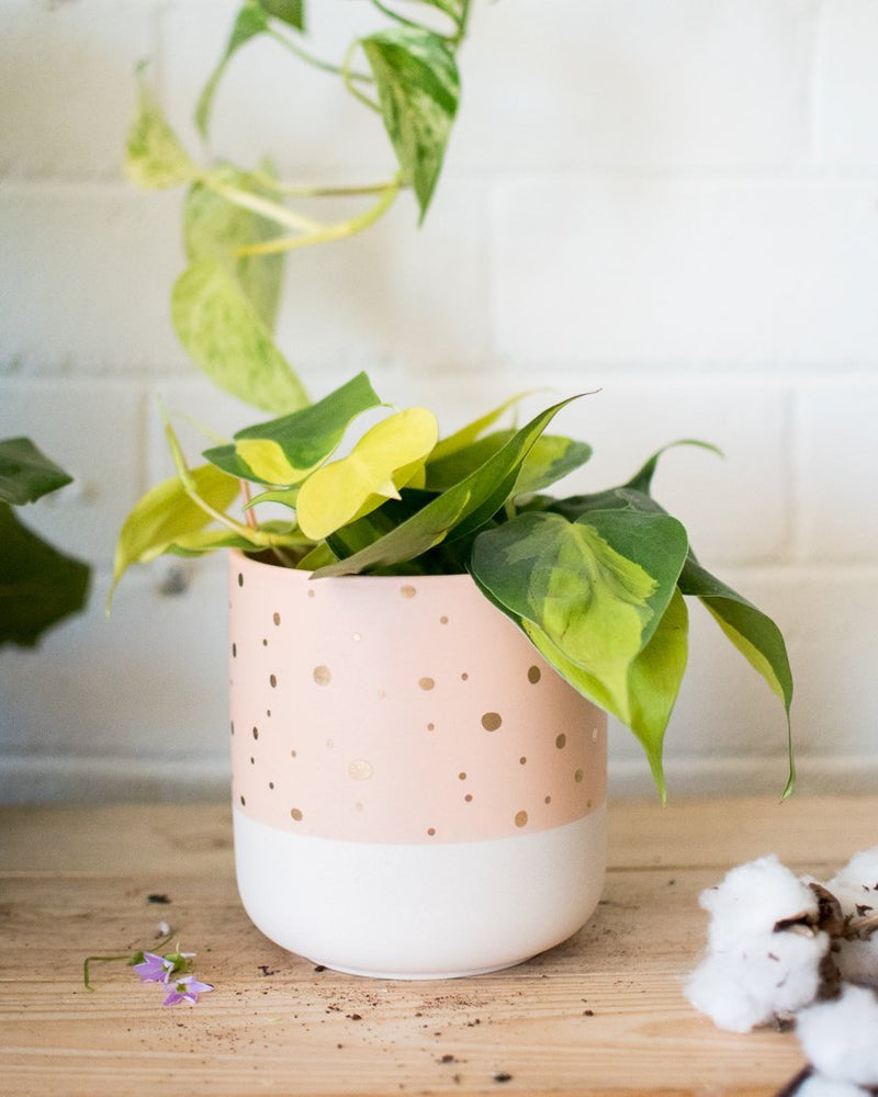 Nola - Cache Pot - Vessels - STUDIO FOLIAGE