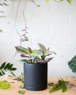 Romey Planter - Black - Vessels - STUDIO FOLIAGE