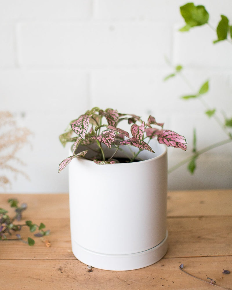 Romey Planter - White - Vessels - STUDIO FOLIAGE