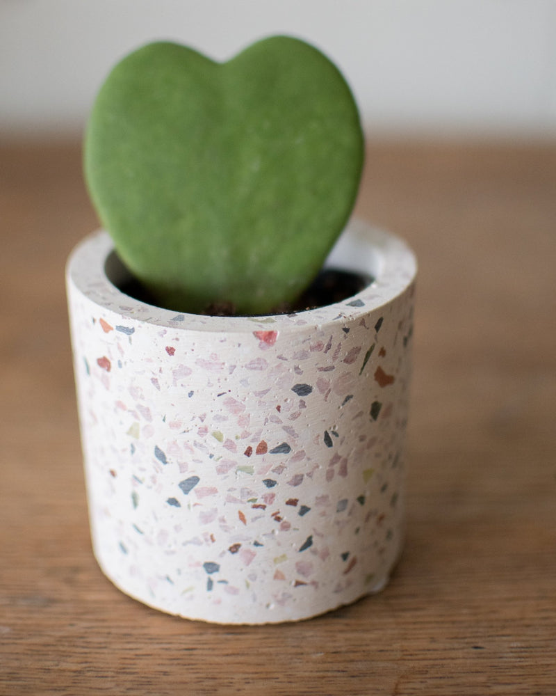 Load image into Gallery viewer, Terrazzo - Cachepot - Vessels - STUDIO FOLIAGE