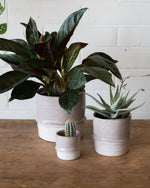 Valley - Cachepot - Vessels - STUDIO FOLIAGE