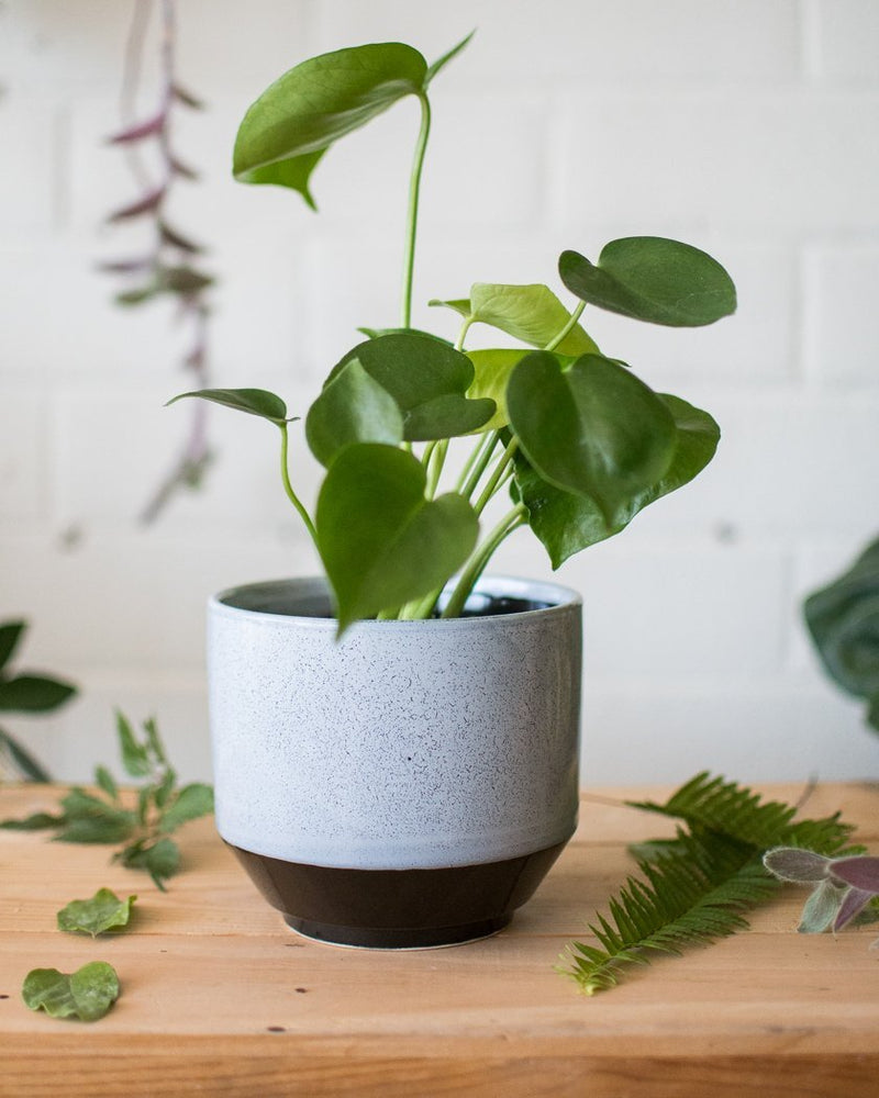 Load image into Gallery viewer, Vanna - Cache pot - Vessels - STUDIO FOLIAGE