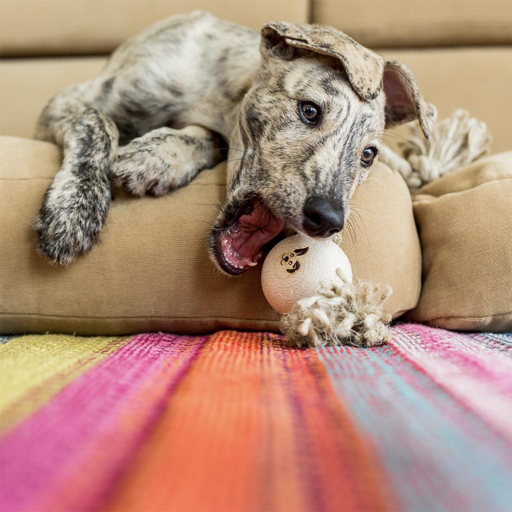 Puppy Deerhound Playing with a Smug Mutts Natural Hemp and Wooden Dog Toy