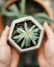 Load image into Gallery viewer, Hexagon Planter (7 Colors)