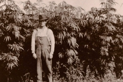 north american pioneer in hemp field