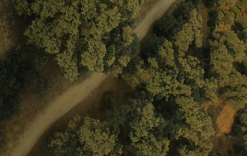aerial photograph of trees used to make tencel clothing