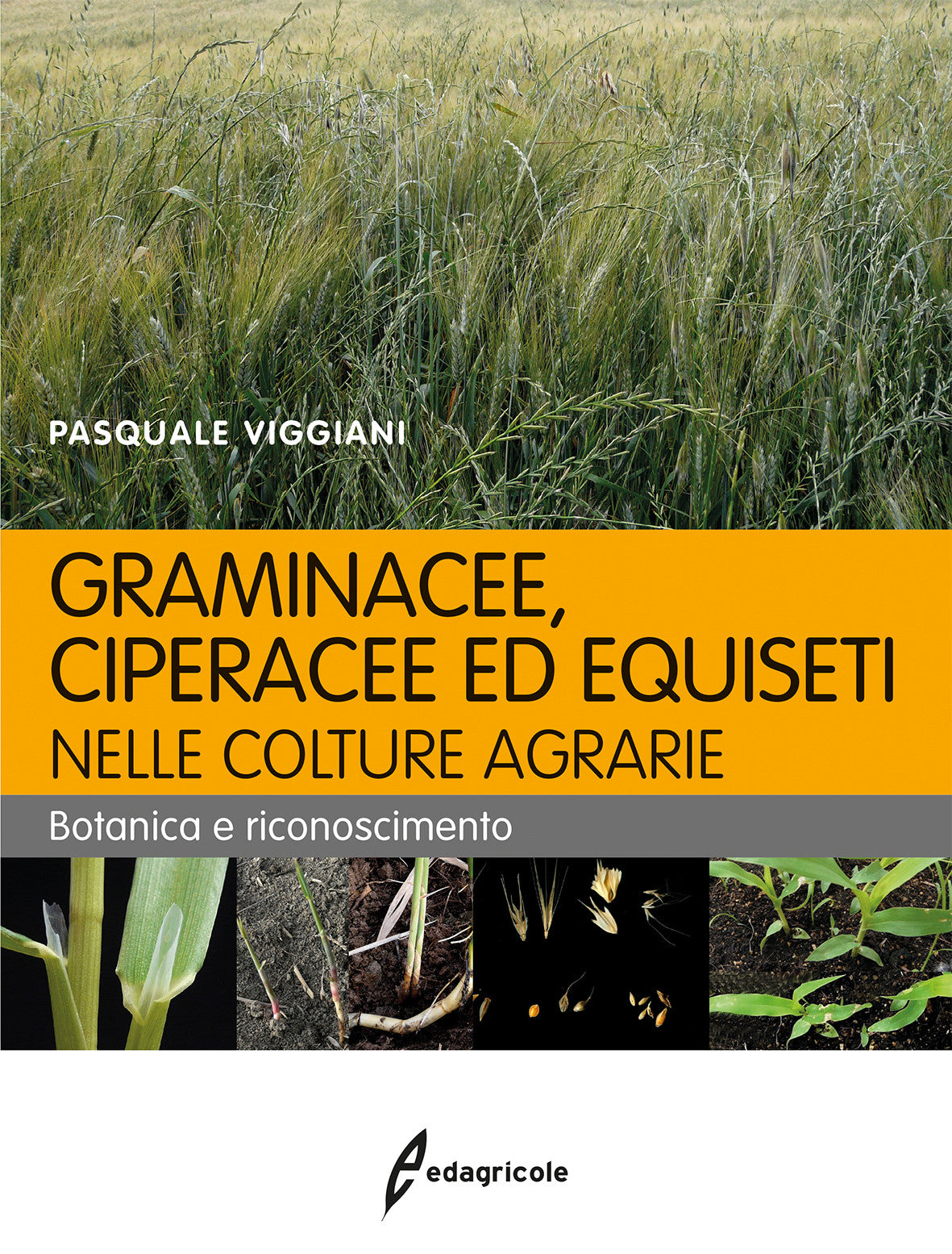 Graminacee, ciperacee ed equiseti nelle colture agrarie