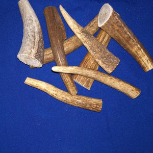 Natural Shed Elk Antler