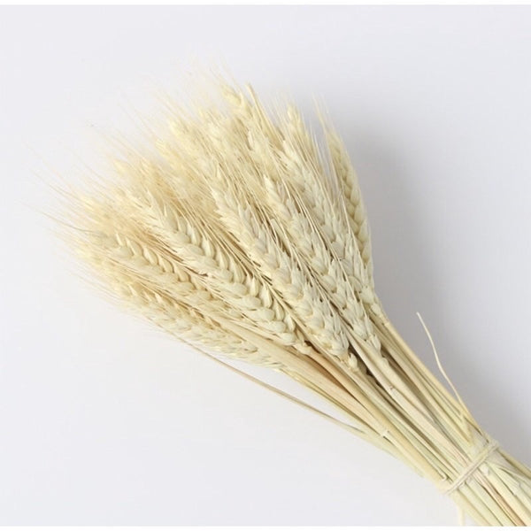 Dried Wheat