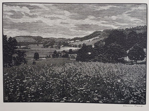 Warren Mack: Warren Mack wood engraving 'Queen Anne's Lace' 1947
