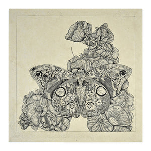 George Whitman: Untitled (Butterflies)