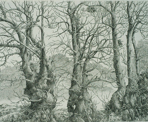 Dirk Van Gelder: Three Trees