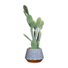 Load image into Gallery viewer, the planter holfing a large cactus