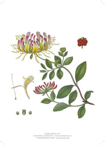 You added <b><u>Flora Danica Kaprifolie A4</u></b> to your cart.