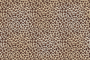 Leopard Print - Limited Edition Collection