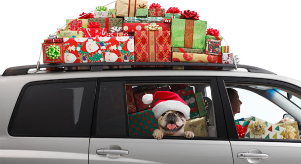 Holiday Travel with the Dog