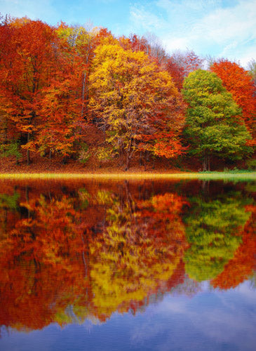 Fall Reflections Wall Art