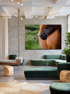 Horse Photo Close Up Wall Art