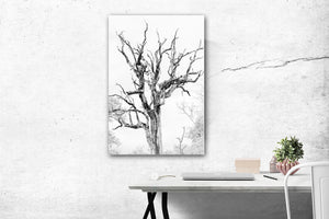 Leopard in Trees Fine Art Print