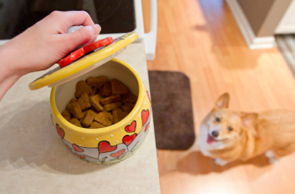 Store dog food in containers