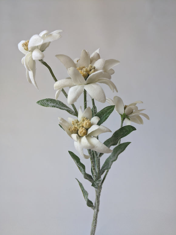 Silk Edelweiss Flower Stem with 5 Flowers