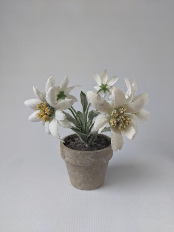 Silk Edelweiss Flower Pot