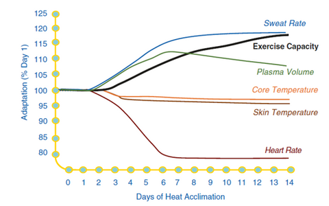 Effects and duration of heat acclimatization