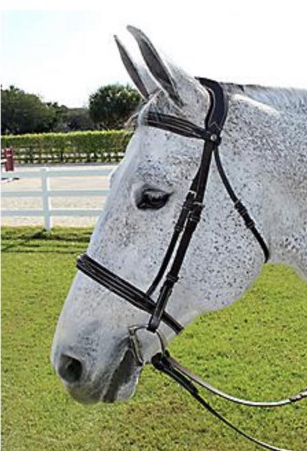 HDR Pro mono fancy padded bridle - Rider's Tack.Apparel.Supply
