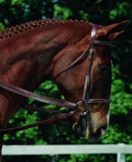 Imperial Draw Reins - Rider's Tack.Apparel.Supply