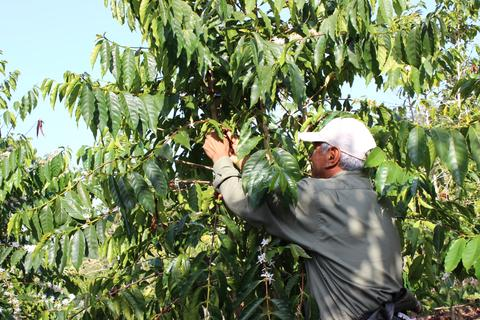 Why Honolulu Coffee's Kona Coffee Farm is Unique