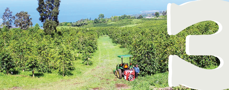 A tractor carrying harvesting farm workers on our Kona coffee farm in Hawaii.